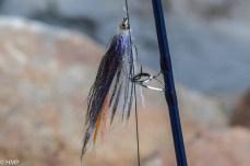 20190101-Neujahrsfischen004