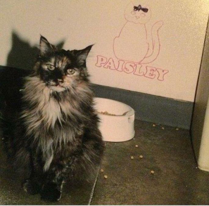 Prince's Cat Paisley