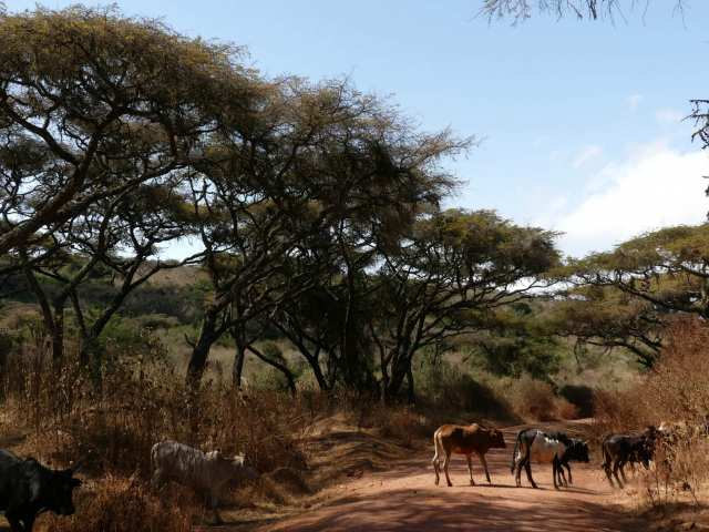 Soulivity Travels: The Game Drive Experience, Thrilling, a Little Bumpy and Awe-Inspiring!