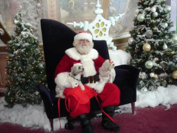 Dolphin Mall to Host Annual Pet Nights with Santa Beginning