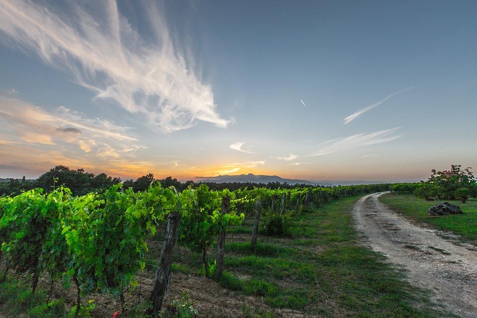 vines-428050_960_720