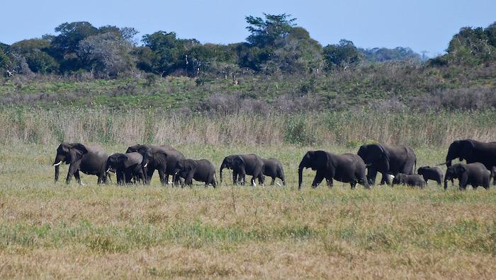 Riserva speciali degli elefanti