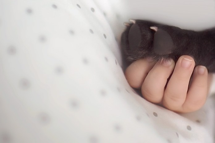 bebê-e-cachorro-registro