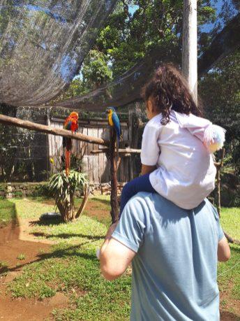 aves-zoologico-gramado