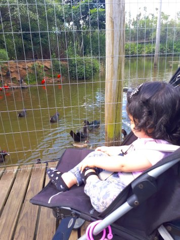 gramado-zoologico-passeio-com-criancas
