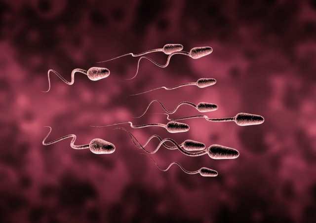 Sperm Counts