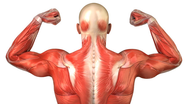"""Can Your Muscles """"Taste"""" Sugar? 