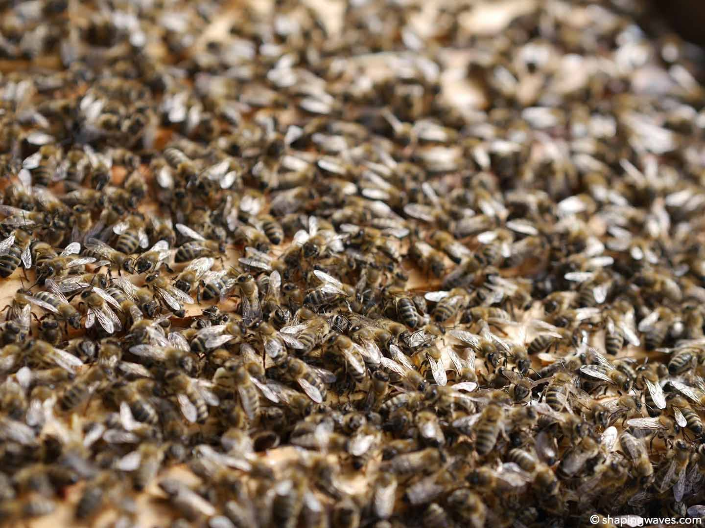 Recording Bees Close-up