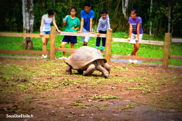 tortues chamarel maurice