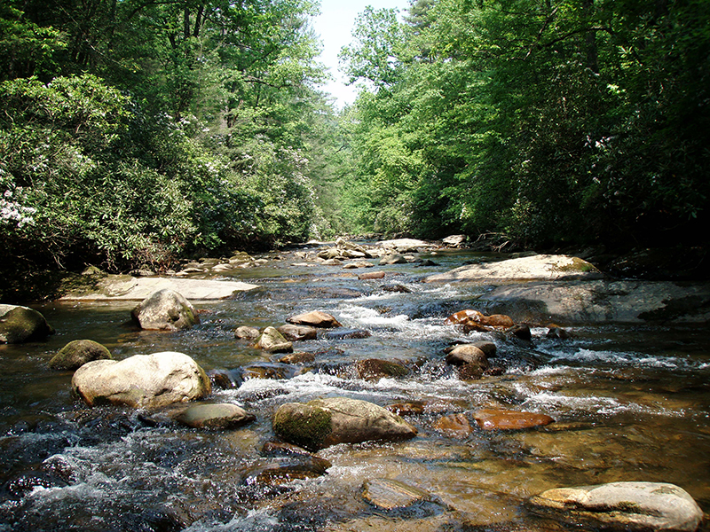 The whitewater rivers of South Carolina provide excellent habitat for a myriad of native fish species, including trout.