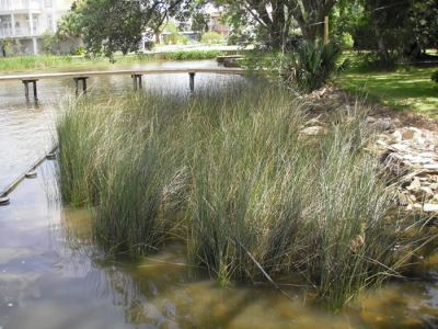 Homeowner Scale Living Shorelines