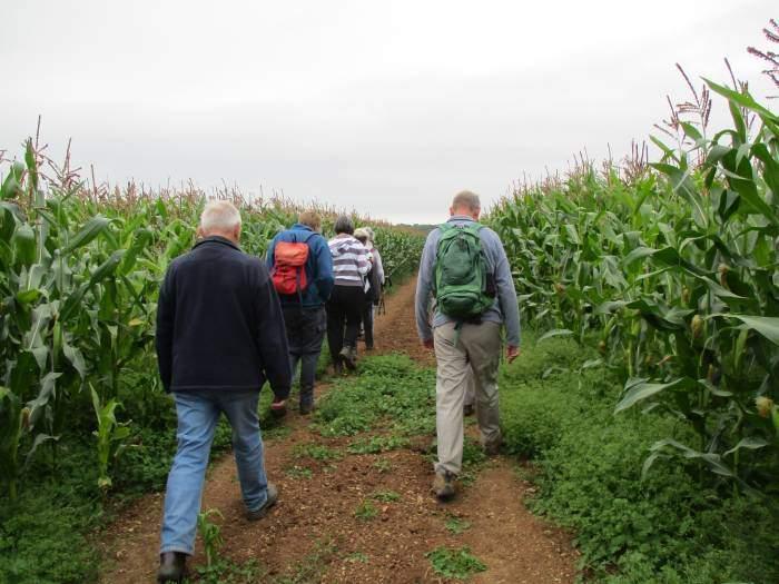 A good path through the maize