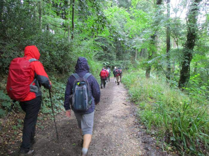 And into woods. (Camera goes away as the rain increases)