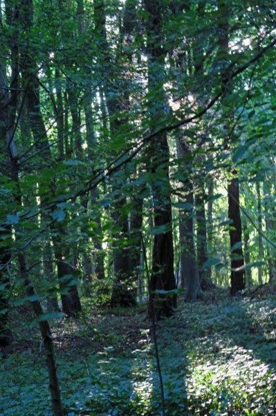 The sun shining through the trees