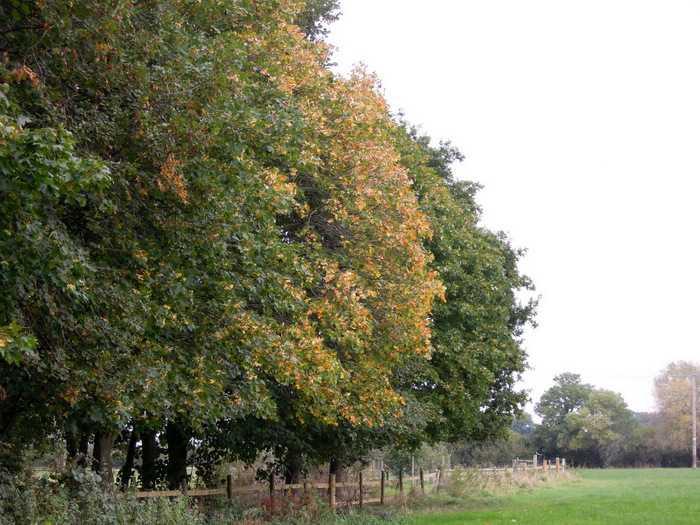 More Autumn tints