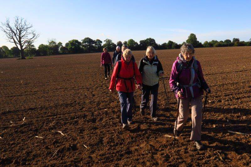 A recently cultivated fields starts our walk