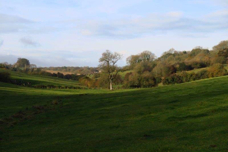Looking uphill towards Birdlip