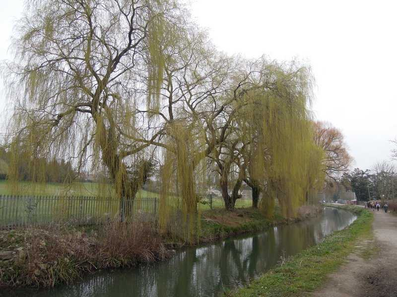 By the banks of green willow