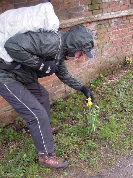 Brian spots three daffodils