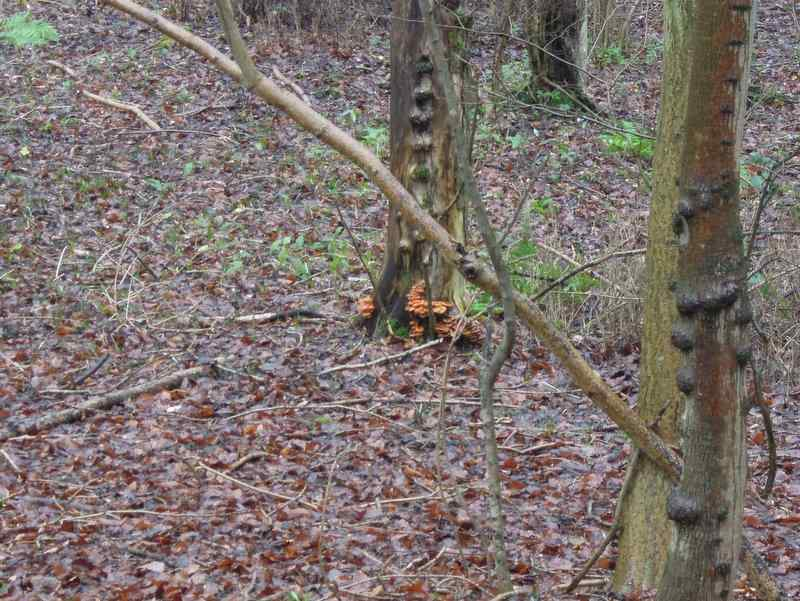 Striking fungi on the trees