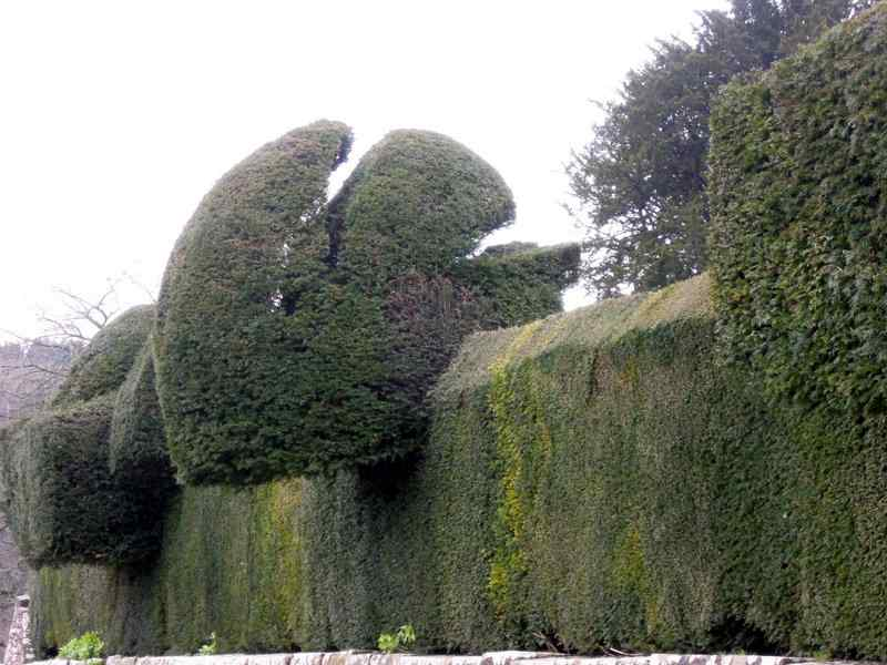 The topiary yew hedge - the squirrel we think - needs a trim? The hedge was planted about 100 years ago by Gimson and the Barnsleys.