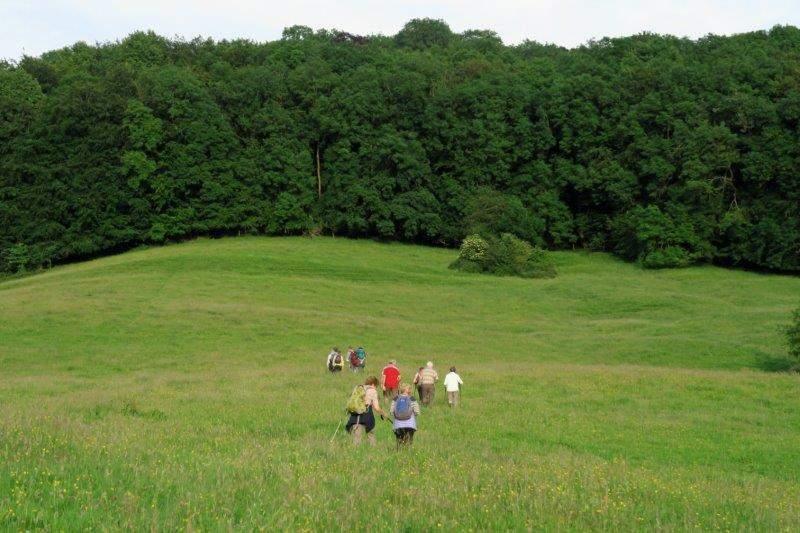 Towards Manor Woods