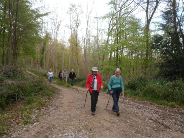 We walk through the woods
