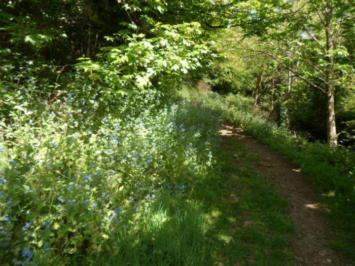 We descend into Great Malvern and have a leisurely coffee in the hotel, then follow this path through the woods