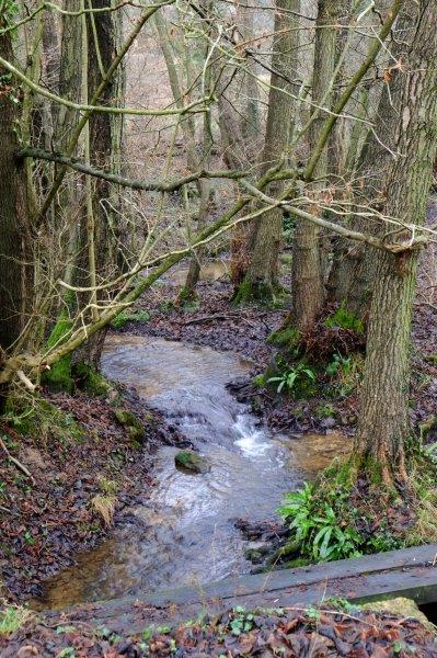 Crossing the stream on some wooden sleepers