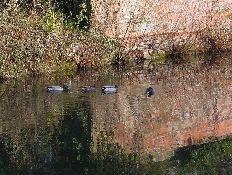 Ducks seem happy enough