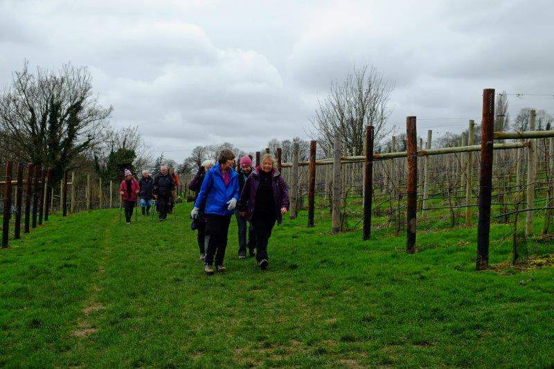 Following the Cotswold Way through the vineyards