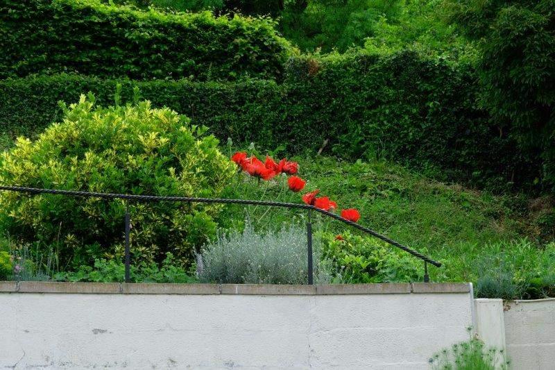 Striking poppies