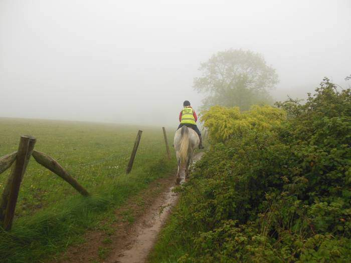 Where a horse and rider have right of way