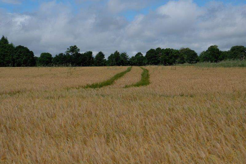 Tractor tracks stretching across
