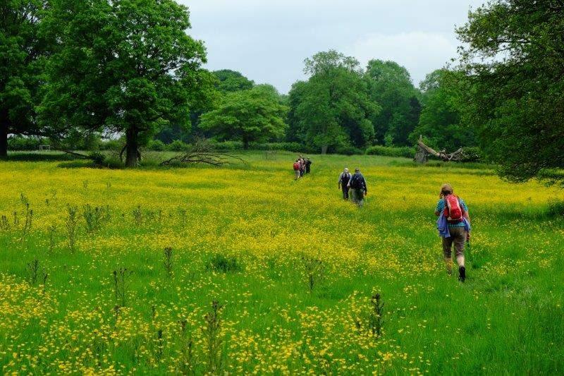 Then across some fields of buttercups