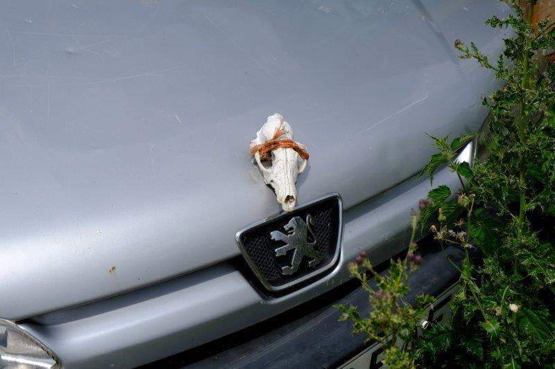 And we spot an unusual decoration on the front of a car