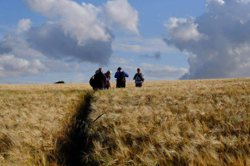Continuing into a field of barley
