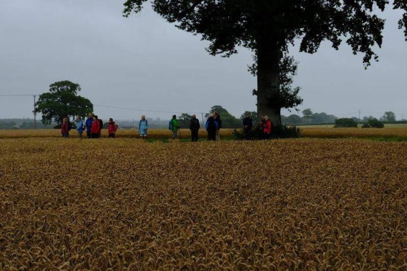 Fields of wheat await us