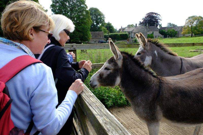 We are greeted by the village donkeys