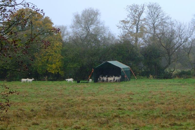 A new line in portable field shelters for sheep
