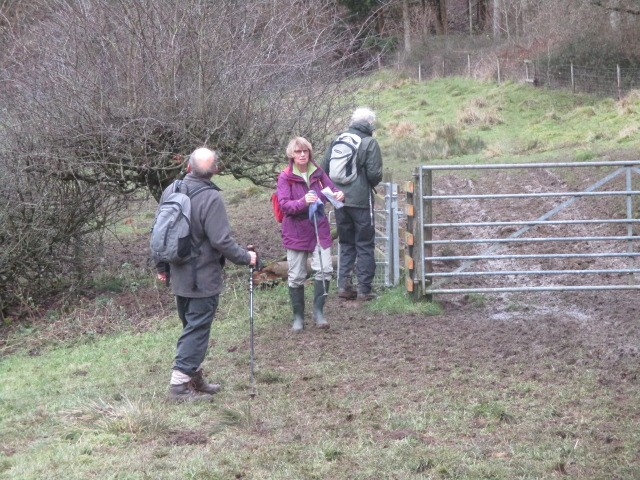 Sue back marking - muddy in places