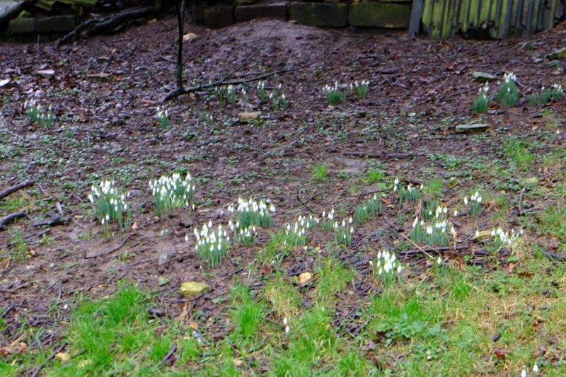 Some practice for the snowdrop walk in a couple of weeks time