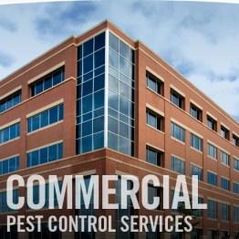 Pest Control Lumberton Tx - commercial pest control Hardin County
