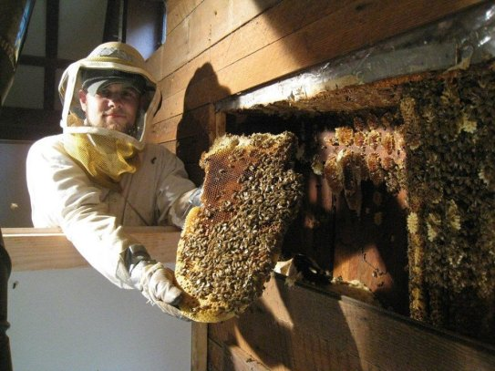 bee removal Beaumont TX, bee removal Port Arthur, bee removal Orange TX, bee removal Vidor, bee removal Winnie TX, bee removal Southeast Texas, bee removal Golden Triangle, SETX bee removal