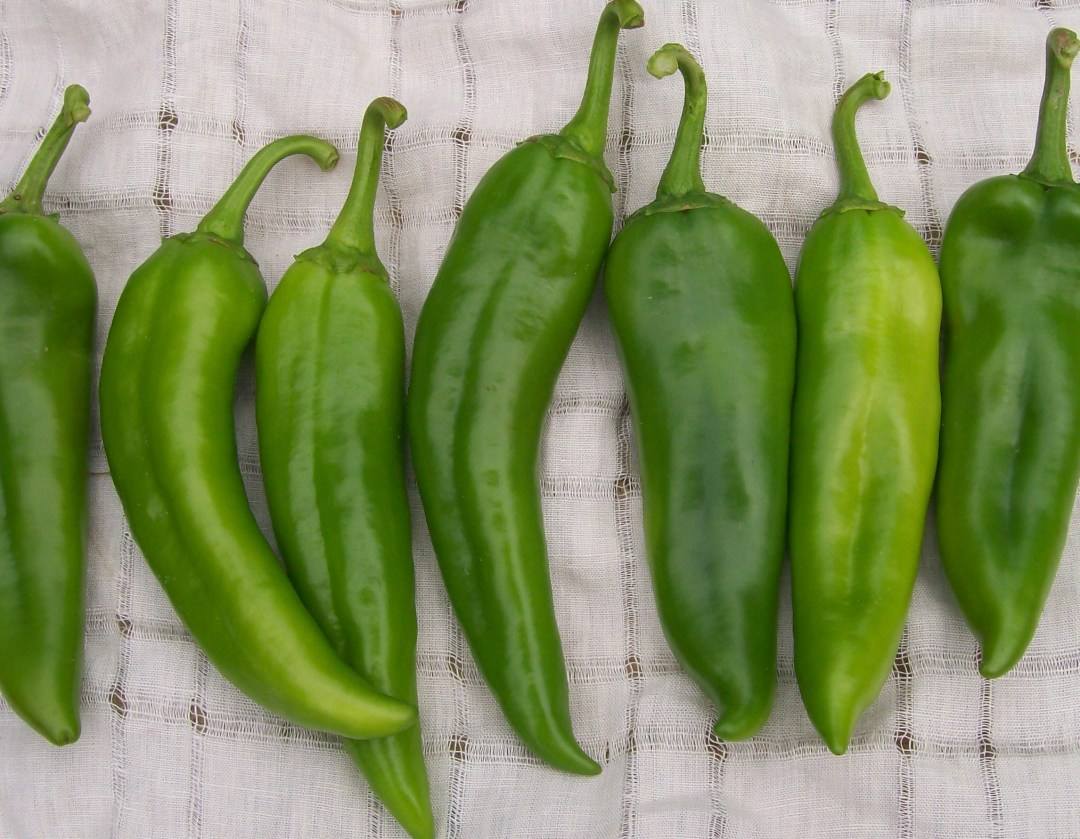 Anaheim Chile Hot Pepper