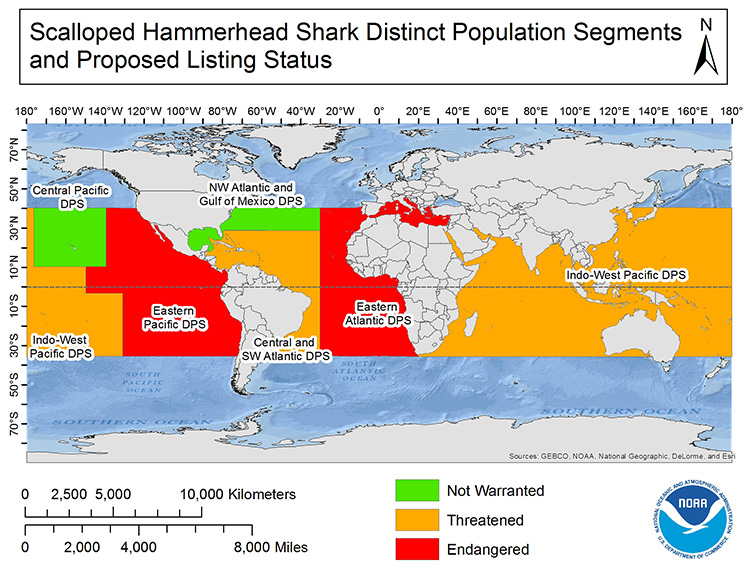 a map of which scalloped hammerhead distinct population segments will be listed threatened or endangered