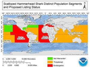 A map of which scalloped hammerhead distinct population segments will be listed threatened or endangered (i.e. a map of a majority of the ocean)