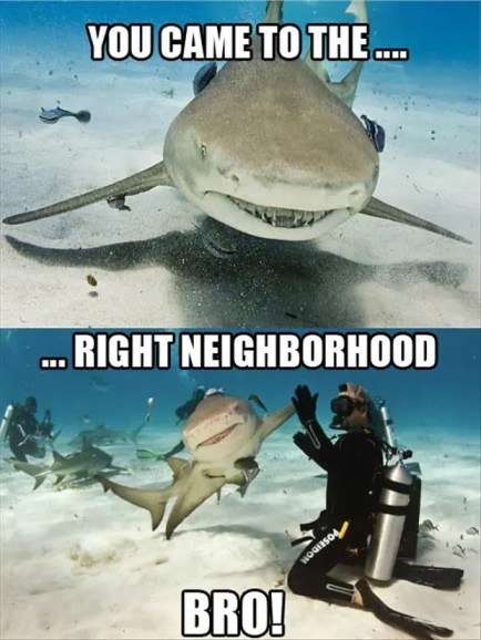 high-five-a-shark1