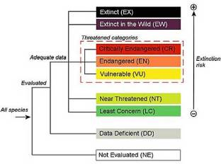 """A hierarchy of IUCN Red List categories. Note that """"Threatened"""" includes Vulnerable, Endangered, and Critically Endangered"""