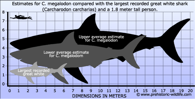 Image from Prehistoric-Wildlife.com . I used their lower average estimate.